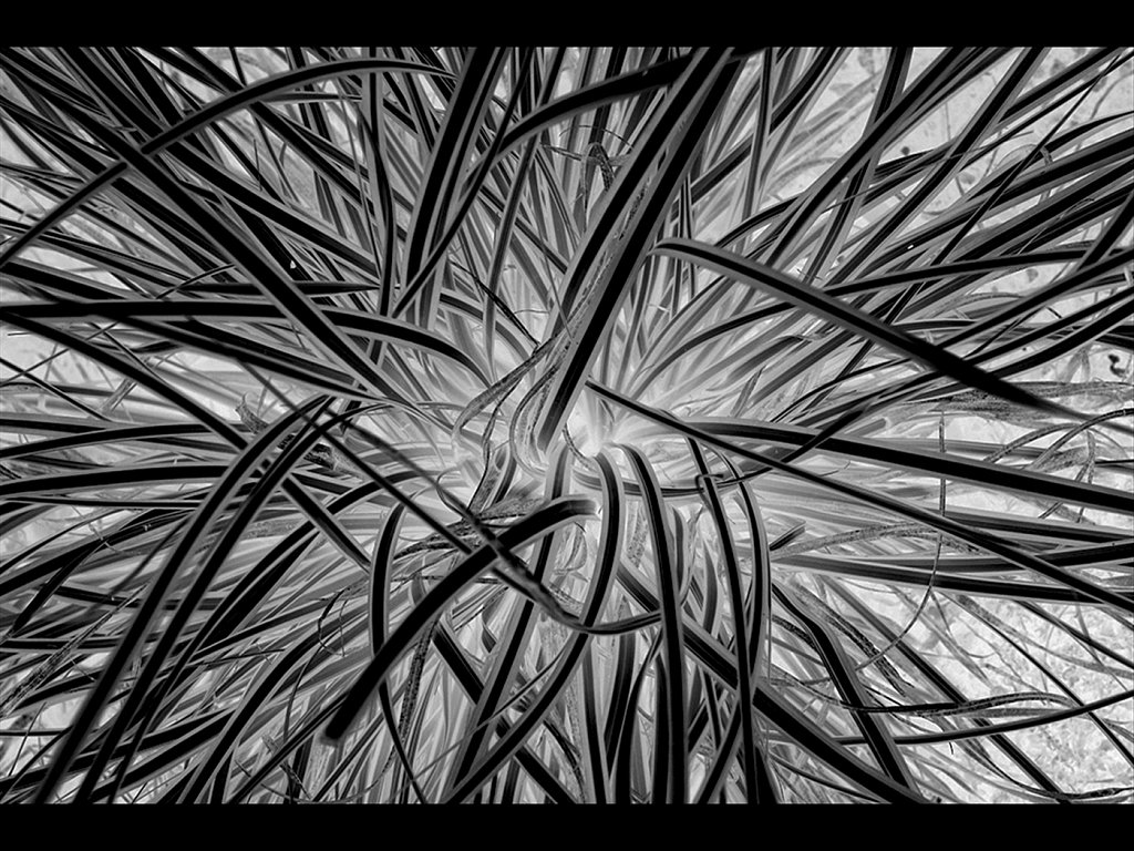 Natures Lines (c) John Metcalfe [Commended]