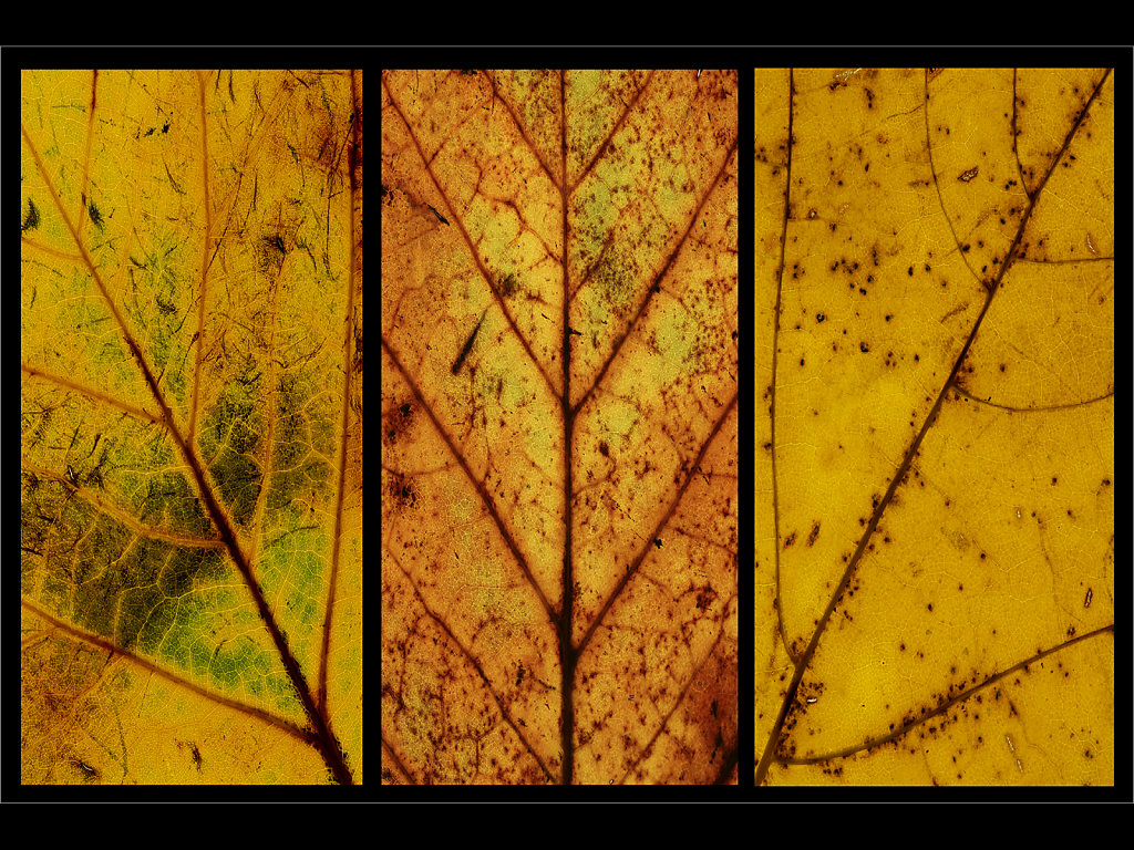'Autumn Patterns of Decay' Copyright (C) Mike Atkinson 2018
