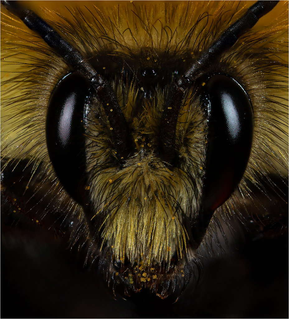 'Honey Bee Tom Petty' Copyright (C) Mike Atkinson 2020